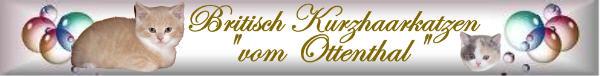 Seit vielen Jahren eine kleine Liebhaberzucht von Britisch-Kurzhaarkatzen in Berlin. Unsere süßen Knuddelbären haben vorwiegend die Farben Creme, Red, Bi- und Tricolour auch als Point